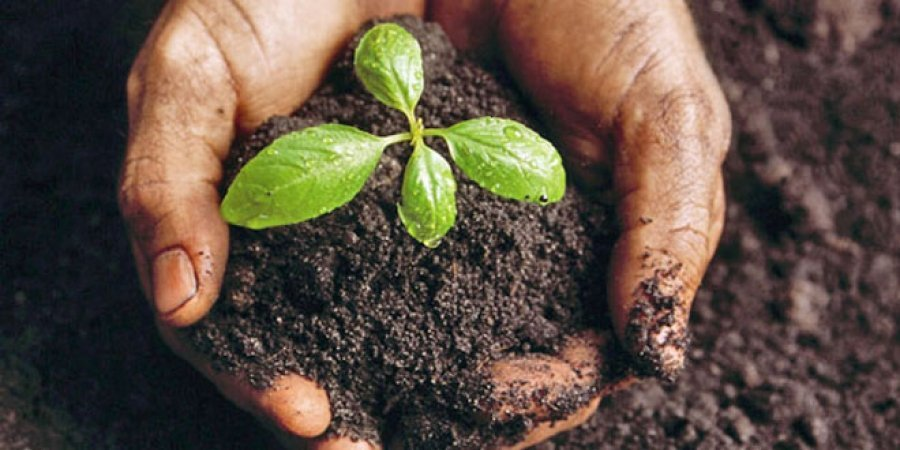 StudyQA: Career options for Soil Science graduates