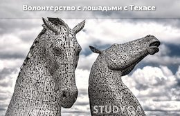StudyQA: Horse Internship, USA, Texas